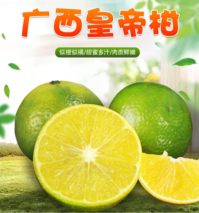 广西武鸣皇帝柑 开果器随机送 新鲜水果 柑橘 橘子