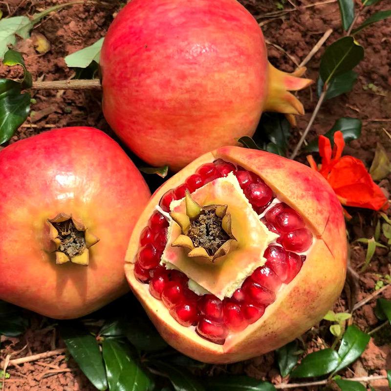 河阴突尼斯软籽石榴  新鲜水果