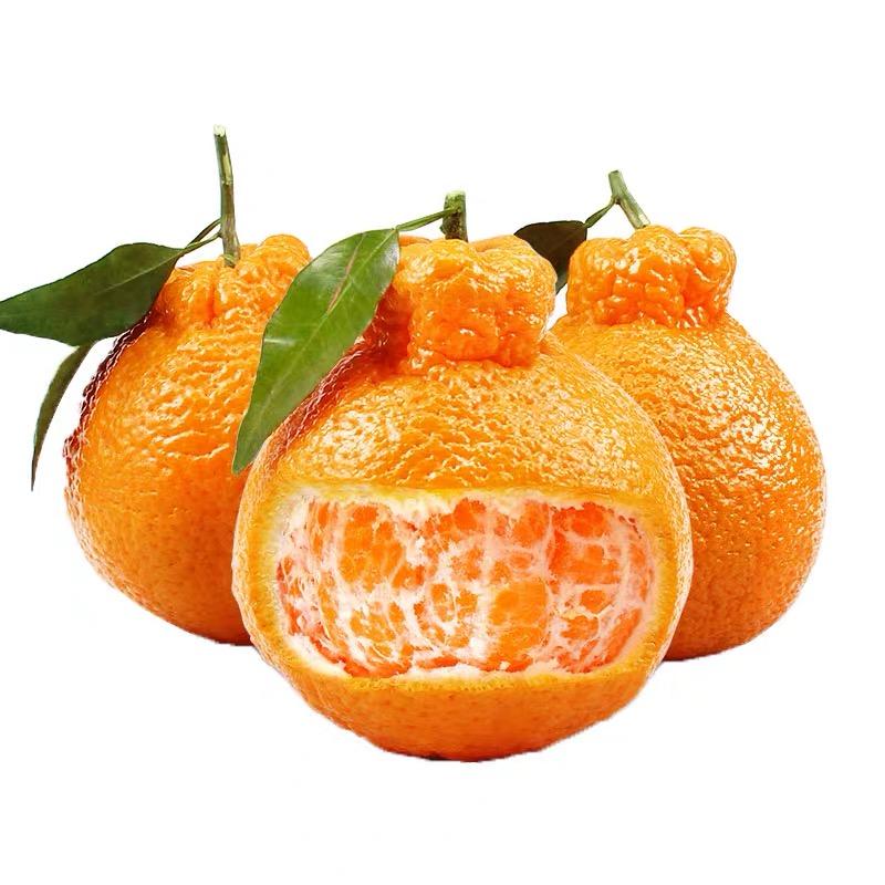 四川不知火丑橘 3斤/5斤/8斤/9斤